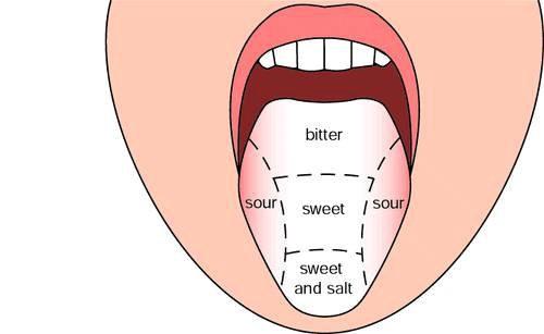 نکاتی که در مورد زبان باید بدانید
