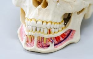کاشت ایمپلنت دندان در طول بارداری